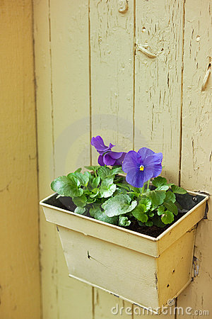 Flowerpot with violet wall decoration