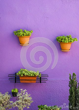 Free Flowerpots Hanging On A Violet Wall, Green Flower Composition Royalty Free Stock Photography - 113678977