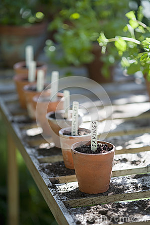 Free Flowerpots With Labels Of Savings In Greenhouse Royalty Free Stock Image - 33897046