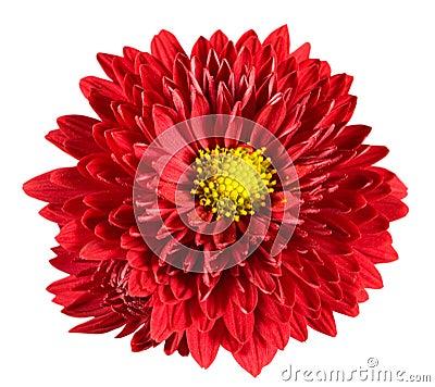 Free Flowers Stock Photos - 11269393