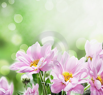 Free Flowers Royalty Free Stock Photos - 18820838