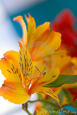 Free Flowers Stock Photo - 2168760