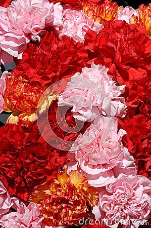 Free Flowers 26 Stock Image - 670261