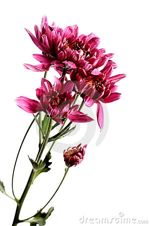 Free Flowers Stock Photography - 2696202