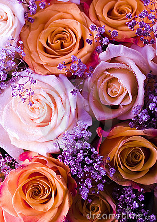 Free Flowers Stock Photo - 2870770