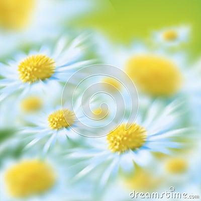Free Flowers Stock Image - 2882771