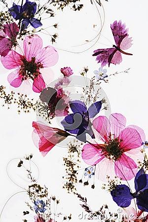 Free Flowers Royalty Free Stock Photos - 3181678