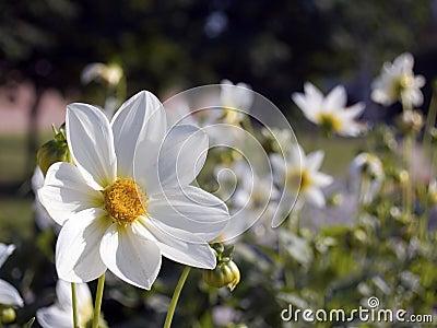 Flowers [4]