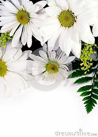 Free Flowers Stock Photos - 450453