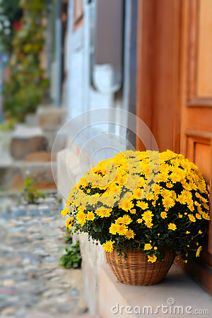 Free Flowers Stock Photography - 55477082