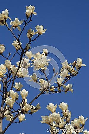 Free Flowers Stock Photo - 8744160