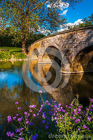 Free Flowers Along Antietam Creek And Burnside Bridge, At Antietam National Battlefield Royalty Free Stock Photos - 31997428