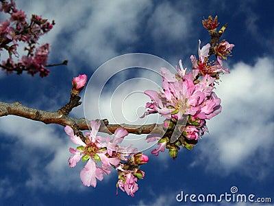 Flowers Amazing colors