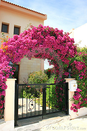 Flowers arch at the house