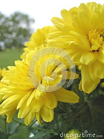 Flowers as Sunshine
