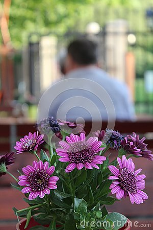 Free Flowers At A Restaurant Table Royalty Free Stock Photography - 115380957