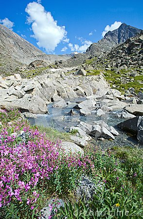 Flowers on the bank of a mountain stream