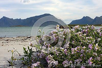 Flowers on a beach