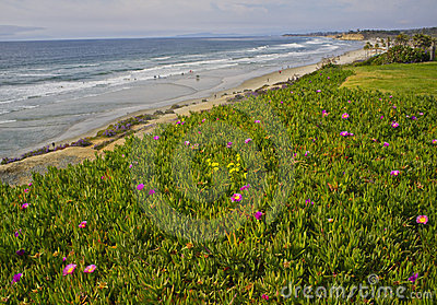 Flowers and Beach, California Coast