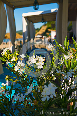 Flowers at Beach restaurant