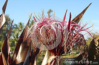 Flowers on Big Island, Hawaii