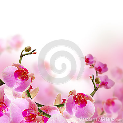 Free Flowers, Blossom Summer Background With Orchid Stock Images - 28758854