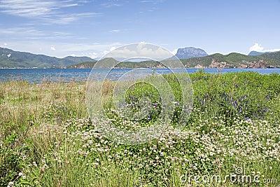 Flowers Beside a Blue Lake