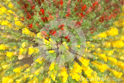 Flowers in blur ligh in yellow and red