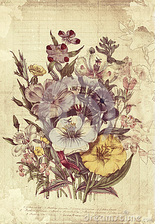 Free Flowers Botanical Vintage Style Wall Art With Textured Background Stock Photos - 30809013
