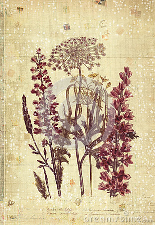 Free Flowers Botanical Vintage Style Wall Art With Textured Background Royalty Free Stock Images - 30809039