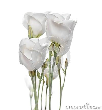 Flowers bouquet(Lisianthus flowers)