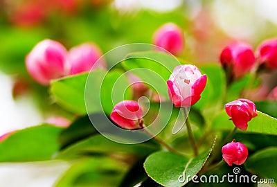 Flowers buds