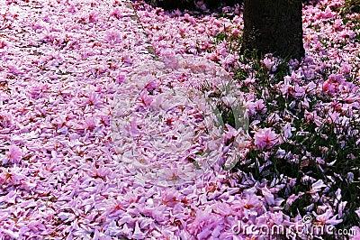 flowers, Canada