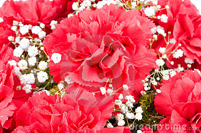 Flowers of carnations