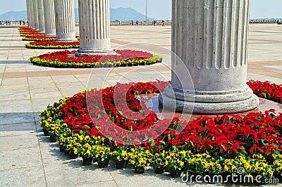 Flowers in century plaza