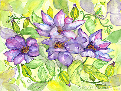 Flowers Clematis Watercolor Painting