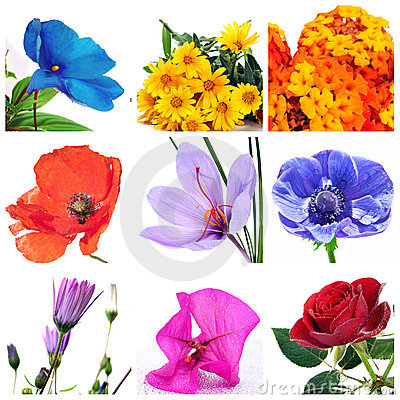 Free Flowers Collage Royalty Free Stock Image - 17230236