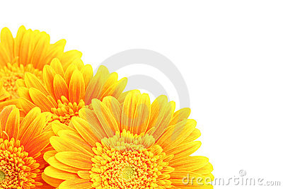 Flowers corner isolated
