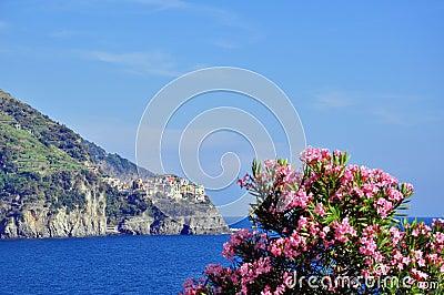 Flowers in Corniglia, Cinque Terre