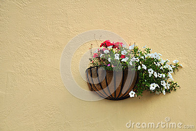 Flowers on cream wall