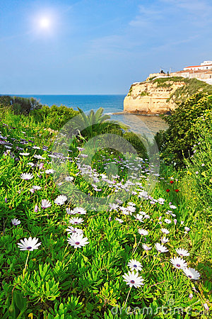 Flowers, daisies, grass in the garden beach.