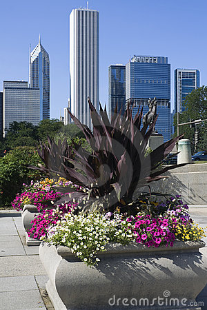 Flowers in downtown Chicago