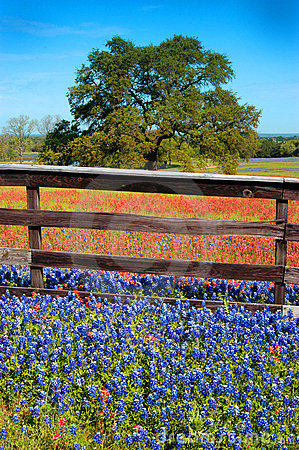 Flowers Fence and Oak 3