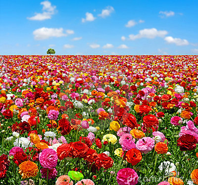 Free Flowers Field Royalty Free Stock Photos - 2405508