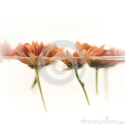 Flowers floating on water