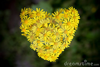 Flowers form the shape of the heart