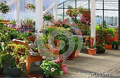 Flowers in the garden.