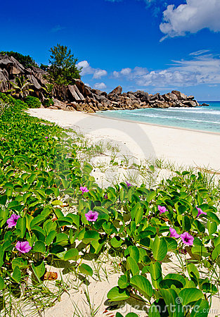 Flowers on grande Anse beach in the seychelles
