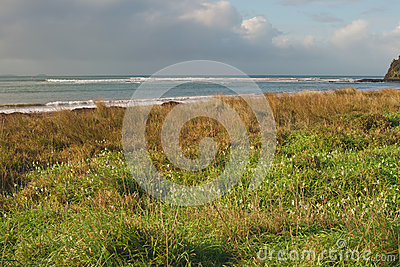 Flowers and grass on beach