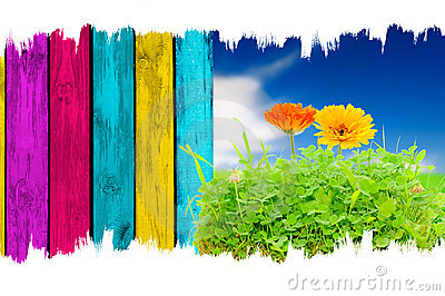 Flowers in Grass, Blue Sky and Wooden Fence